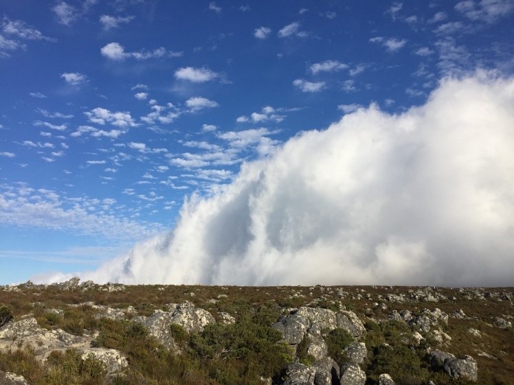 A wall of cloud on the summit of a 365 Ubuntu Climb Table Mountain
